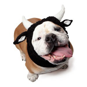 Zoo Snoods Bull Dog Costume