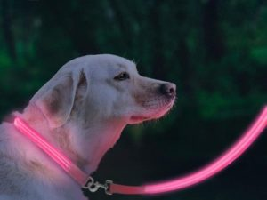 FunnyBubble LED Dog Safety Leash