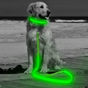 HiGuard LED Dog Leash
