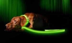 Ilumiseen LED Dog Leash