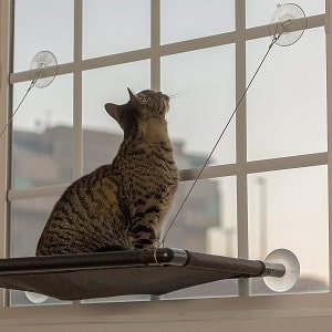 Monkeen Cat Window Perch