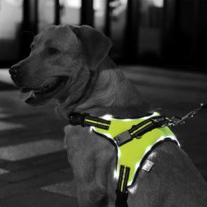 PAWZ Road Dog Harness