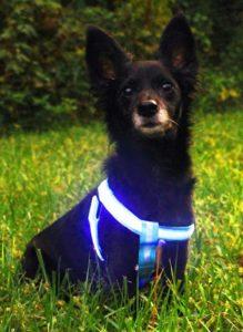 SAFA LED Dog Harness, Blue
