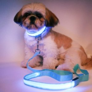 Sincerely, Not Set of Dog Puppy Collar & 4ft LED Leash