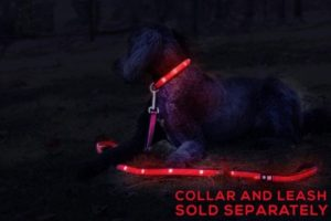 Tuff Tails LED Lightning Dog Leash