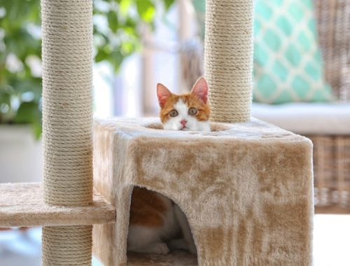 The Best Cat Trees