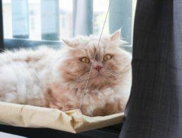 The Best Cat Window Perches