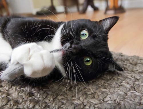 The Best Catnip Toys