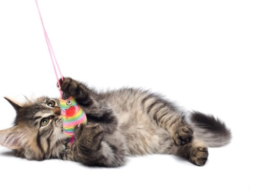 The Best Electronic Cat Toys