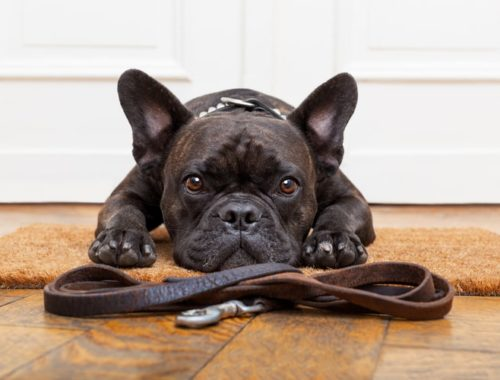 The Best Leather Dog Leashes