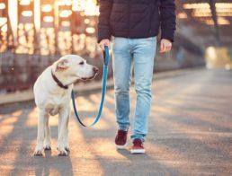 The Best LED Dog Leashes