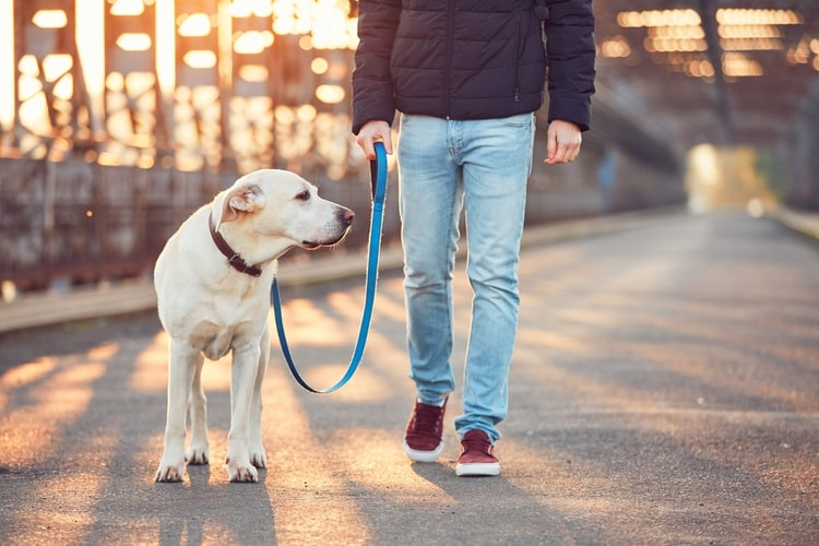 The Best LED Dog Leashes