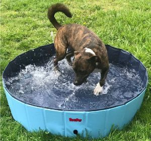 BINGPET Large Dog Swimming Pool