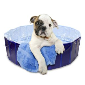 MIMu Pet Swimming Pool