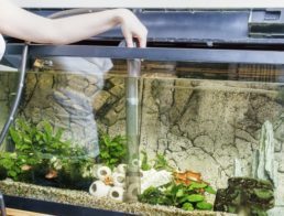 The Best Aquarium Gravel Cleaners