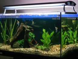 The Best Aquarium Lights