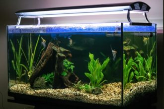 The Best Aquarium & Fish Tank Lights