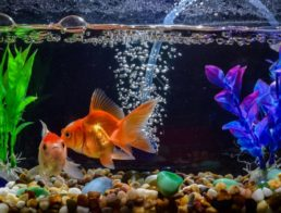 The Best Aquarium Pumps
