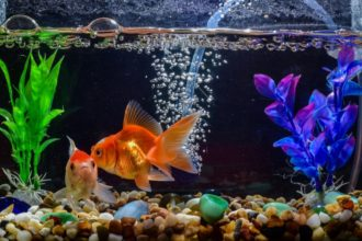 The Best Aquarium & Fish Tank Pumps
