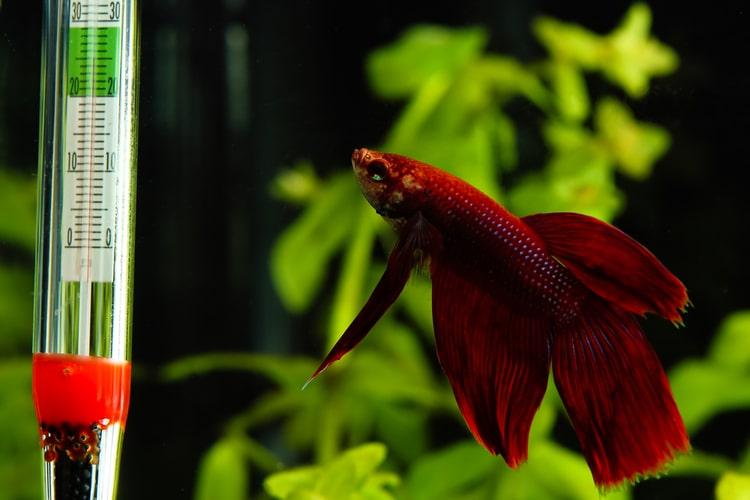 The Best Aquarium Thermometers