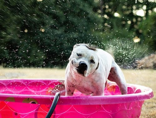 The Best Dog Swimming Pools