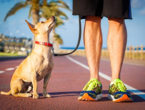 The Best Hands-Free Dog Leashes