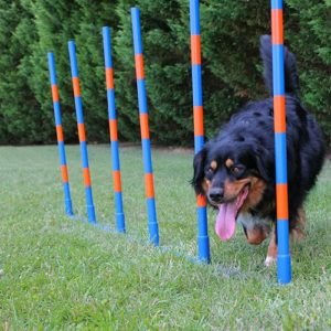 Lord Anson™ Dog Agility Weave Poles