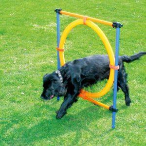 PAWISE Dog Agility Jump Hoop