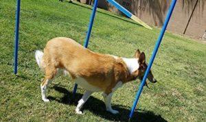 Triple A Dogs Dog Agility Training Weave Poles