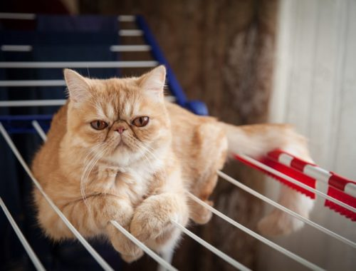 The Best Outdoor Cat Enclosures