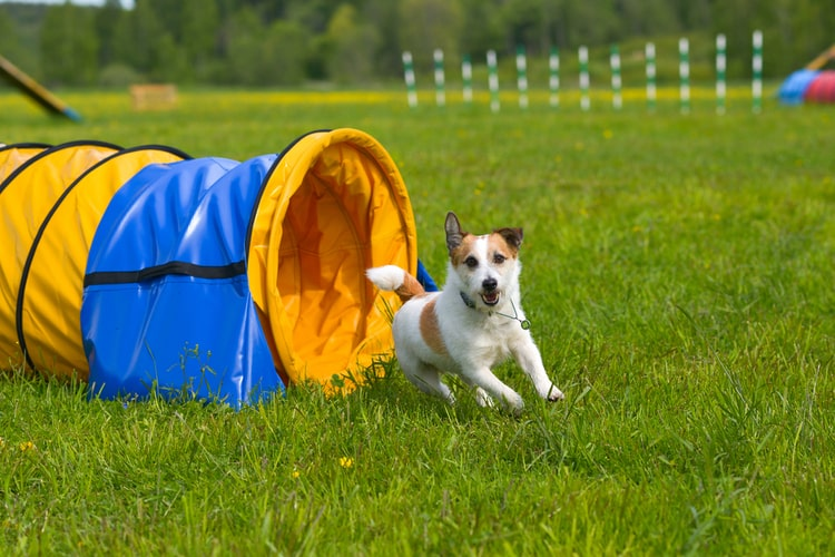The Best Dog Agility Training Equipment