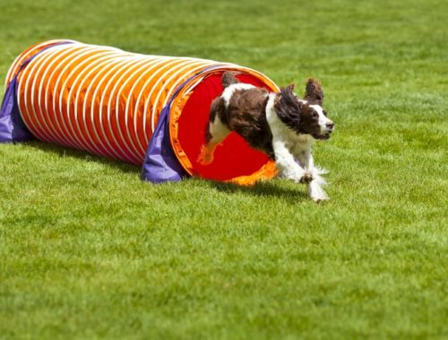 The Best Dog Agility Training Tunnels