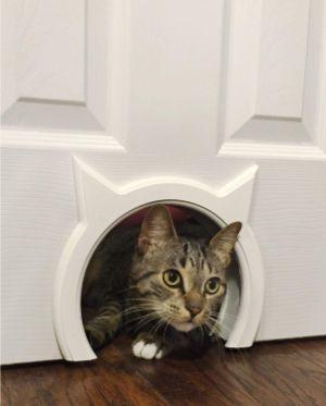 The Kitty Pass Interior Cat Door Hidden Litter Box Pet Door