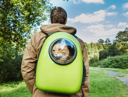 The Best Cat Backpacks