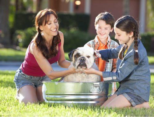 The Best Dog Bah Tubs