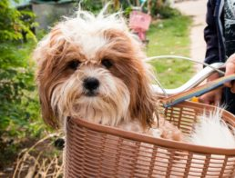 The Best Dog Baskets & Carriers for Bikes