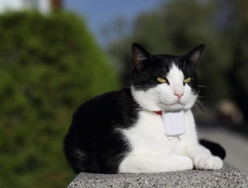 The Best GPS Cat Trackers & Collars