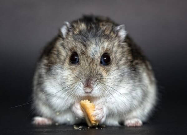 Making Your Home Hamster-Friendly