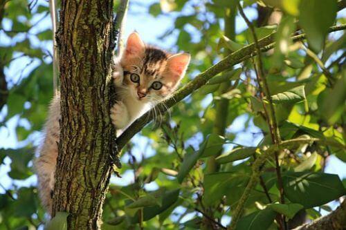 Keeping Your Kitten Safe