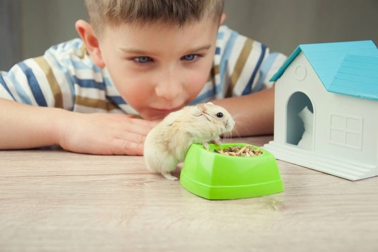 What Do You Need for a New Hamster?
