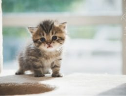 What Do You Need for Your New Kitten?