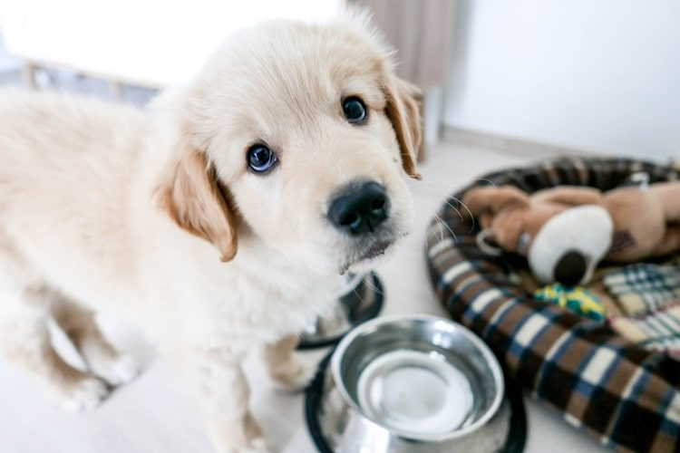 Getting Ready for Your New Puppy