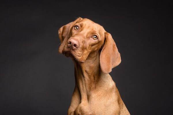 Choosing a Pet Insurance Plan