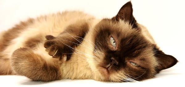 Understanding Pet Insurance Terminology