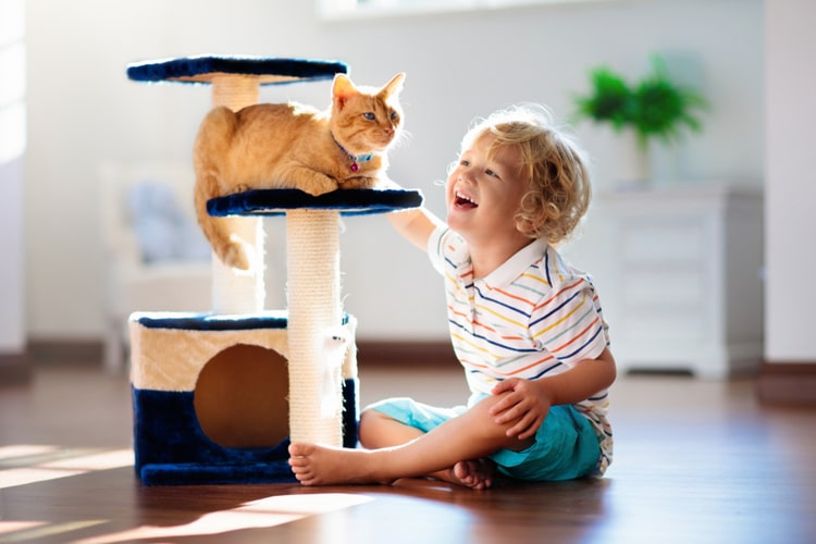The Best Cat Condos