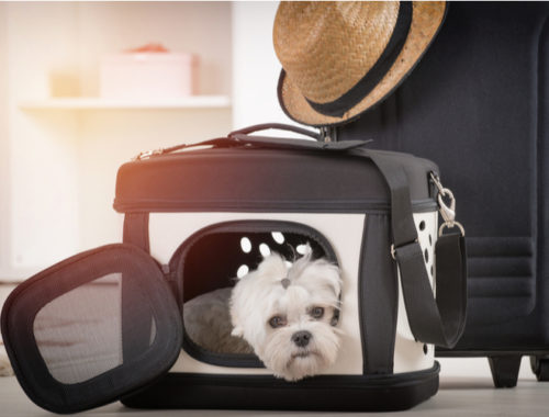 The Best Dog Carriers