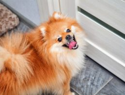 The Best Dog Doorbells