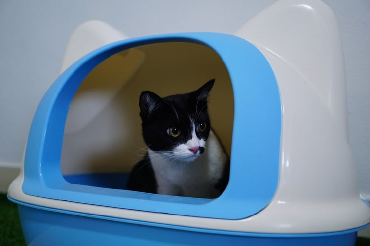 The Best Self Cleaning Litter Boxes
