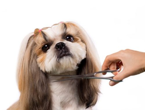 The Best Dog Grooming Scissors