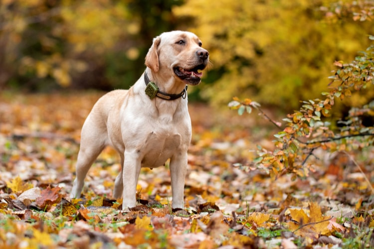 The Best GPS Pet Trackers